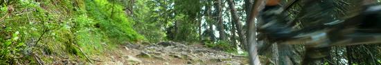 Der Wildkogeltrail I