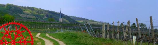 Von Baden über die Thallern- zur Anningerrunde