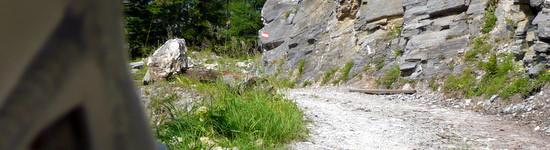 Auf die Schernbergalm 1800 m