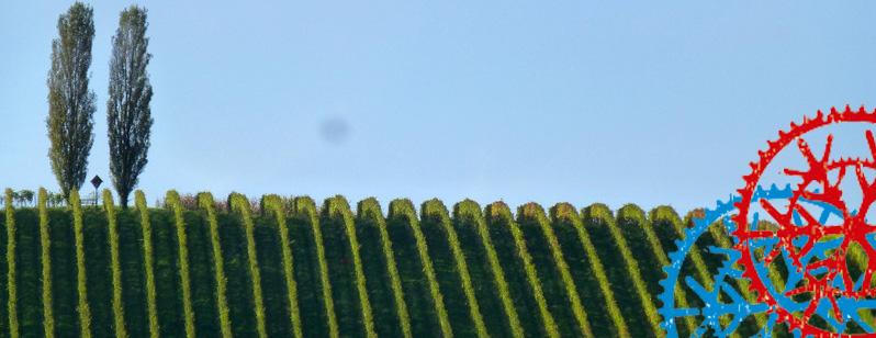 Radrunde – Weinberge – Aussichtswarte Vulkanland -Straden