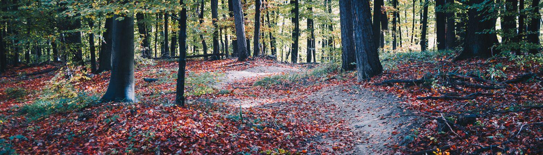 Herbstrunde durch den Wienerwald